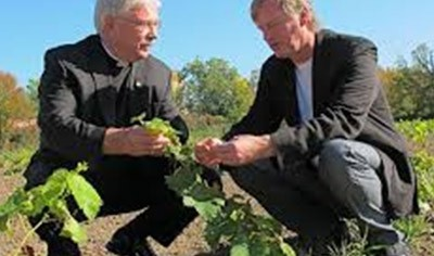 Vineyards planted in Niagara Falls for future winery location
